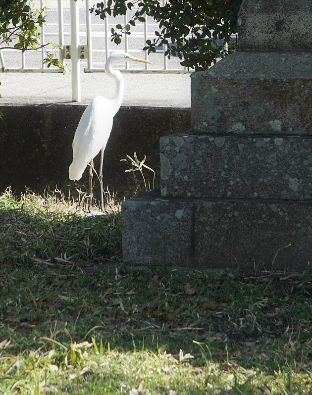 日前・國懸神宮は穴場のパワースポット。駐車場に突然現れた白鷺は神の使いとされ、幸運をもたらすとされる鳥だ。