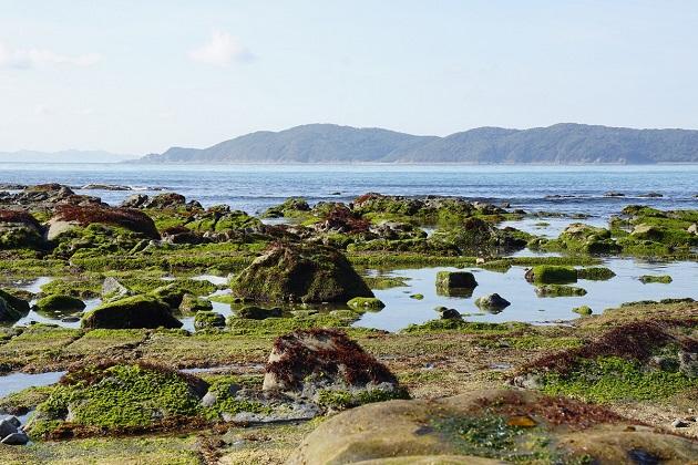 加太海岸は子どもも大喜びのお出かけスポット。ただ、日よけがないので対策が必要。