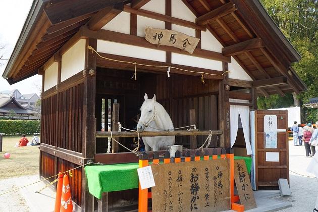 上賀茂神社の神馬も見どころの一つ。下鴨神社とあわせてお参りしたい