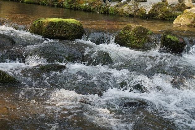 上賀茂神社をパワースポットとして成立させる一助となる川の流れ。観光地としての美しさもピカイチだ。