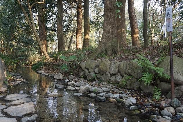 ただすの森は聖域。パワースポットをつくる重要な要素だ。