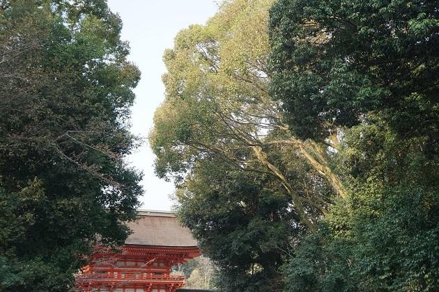 京都最強との呼び名の高いパワースポット「下鴨神社」。閉門時間は夕刻5時半となるので参拝はお早めに。