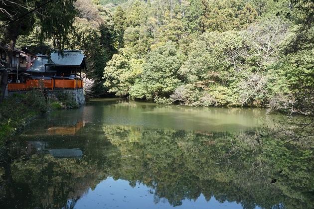 こだま池で占いもできる。隠れ人気パワースポットだ。伏見稲荷大社を訪れた際には是非挑戦を。