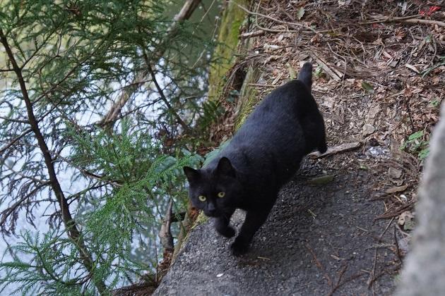 神社で動物に合うのは吉兆だ。伏見稲荷大社では、非常に縁起のいい黒猫に出会えるかもしれない。