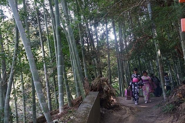 京都の風情が楽しめる境内。伏見稲荷大社は、観光にも適している。