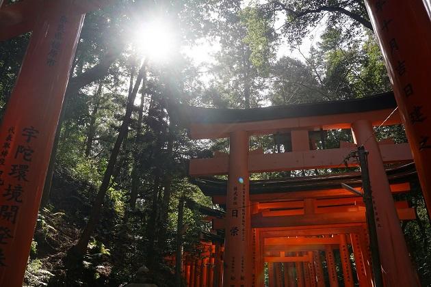 ご神山をめぐる「お山めぐり」。稲荷山に連なる鳥居と緑のコントラストが美しい。