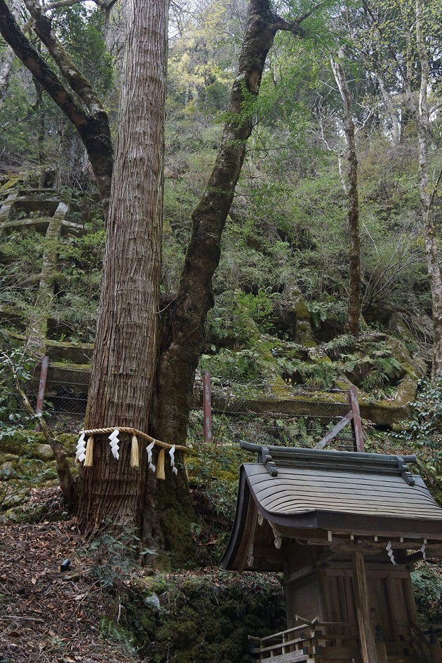 奥宮のご神木。気高い空気が漂う。