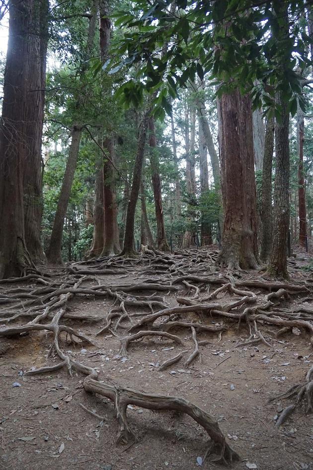 鞍馬寺のみどころ「木の根道」。牛若丸が修行した場として知られる不思議な空間だ。