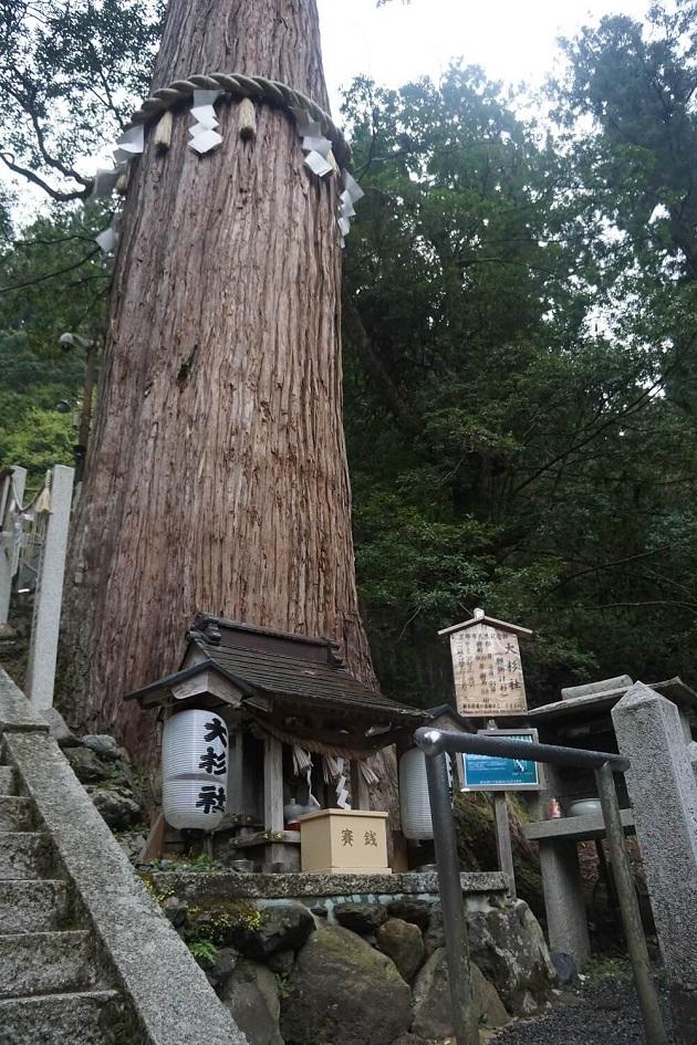 由岐神社のご神木は願掛け杉として信仰を集める。地元では大杉さんの愛称で親しまれている。末社「大杉社」の背後にそびえたつ。