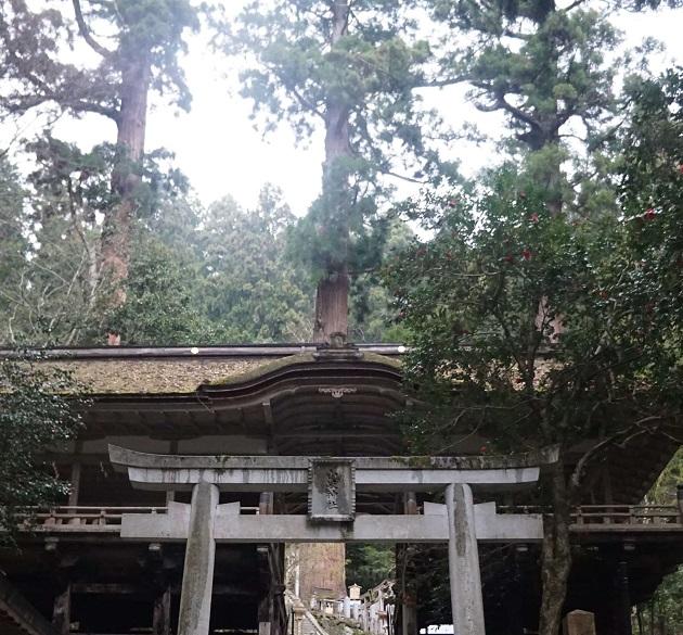 由岐神社には杉の巨木がそびえたつ。