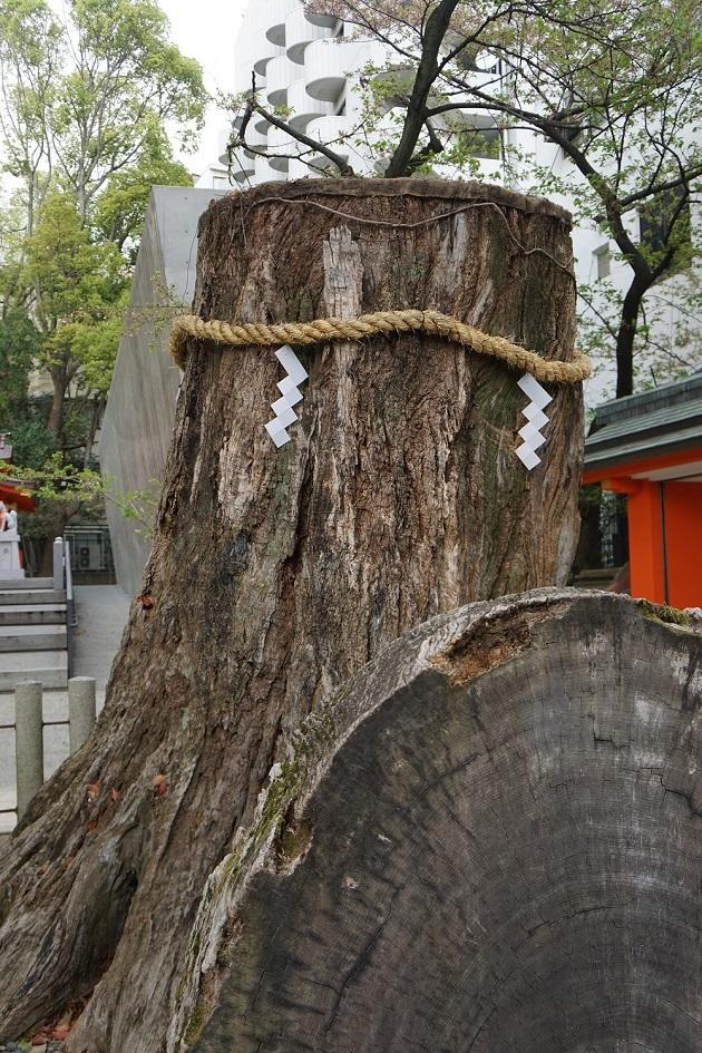 神戸の力強い復活の力を象るご神木。生田神社のみどころのひとつ。