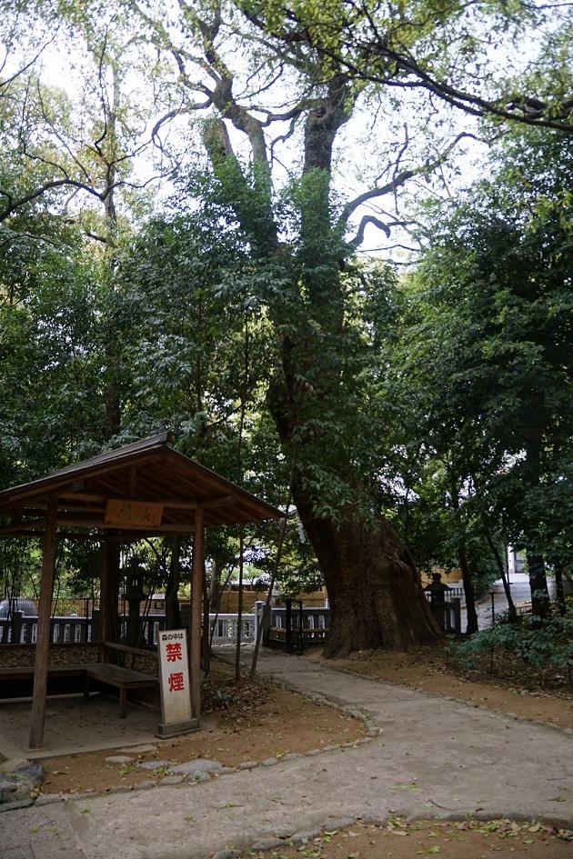 生田神社の鎮守の杜「生田の森」。まるで都会のオアシスだ。