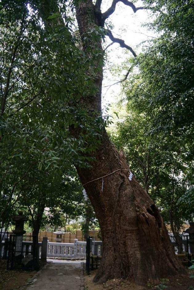 歴史の中でたびたび登場する生田の森。縁結びのご利益を授ける神を祭る鎮守の杜だ。
