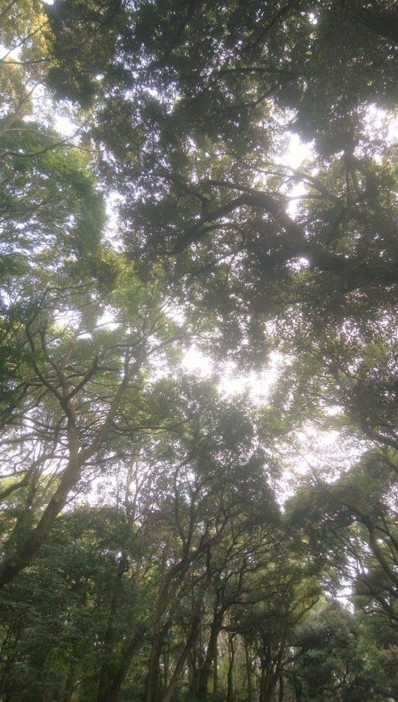 明治天皇への崇敬の念でできた鎮守の杜。すべて植林だったが今は森と化している。