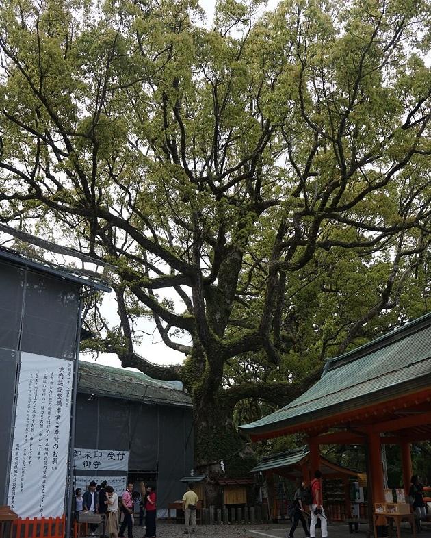 熊野那智大社の御神木。胎内くぐりができる点で熊野信仰の象徴的存在ともいえる。