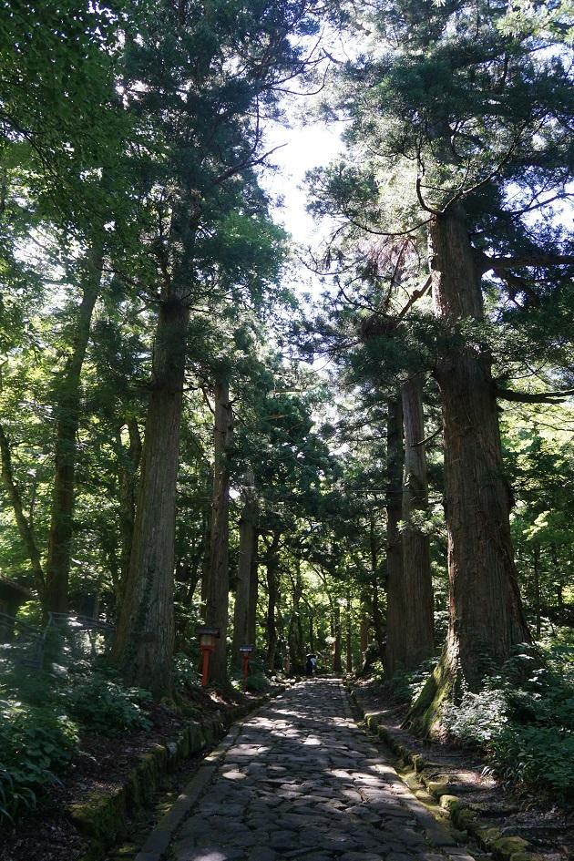 大神山神社奥宮には古木が並ぶ日本一長い参道がある。歩いているだけでも日々のストレスから解放される。一の鳥居から700m。蛇行しながら本殿まで続いている。