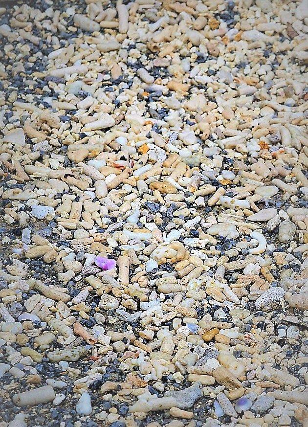 サンゴ砂を敷いた波上宮の境内。南国情緒がたっぷり。