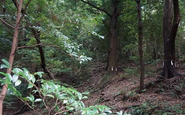 枚岡神社の背後に迫る神津嶽。いまも注連縄が張られた神域だ。