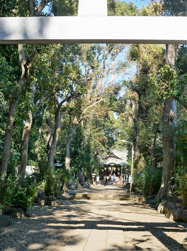 緑の深い代々木八幡宮。都会のオアシスさながらだ。