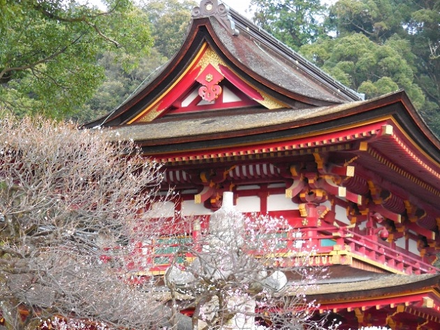 太宰府天満宮の社殿とトレードマークの梅。