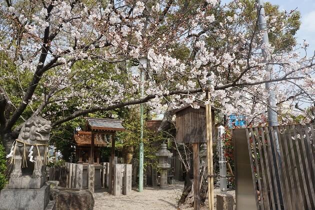 堀越神社の境内。広さはないが見どころがたくさん。