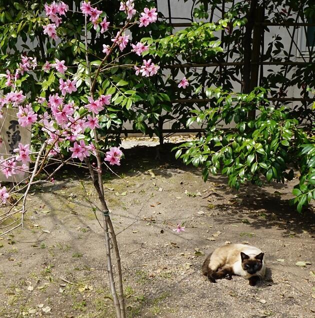堀越神社にいる猫。