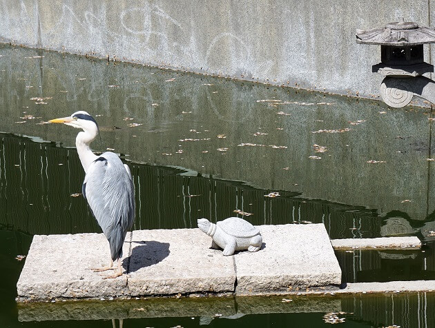星合池で羽を休める白鷺。