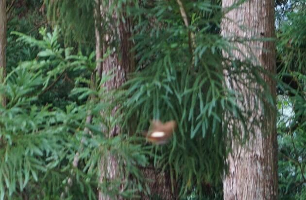 白山比咩神社に出没した謎の生物