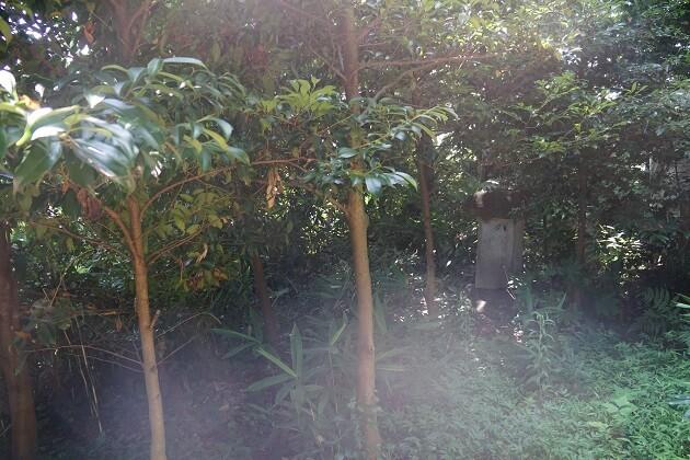 不思議な光が写り込む毛谷黒龍神社で撮影した写真