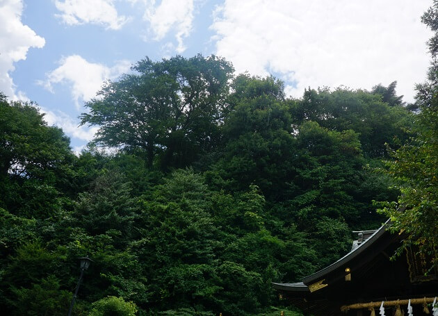 毛谷黒龍神社に降り注ぐお天気雨