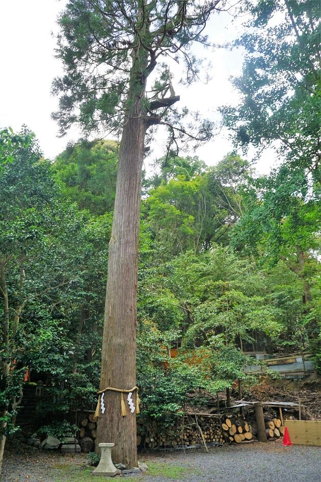 大豊神社の御神木