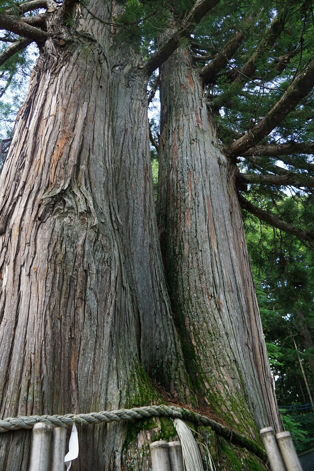 そびえたつ戸隠の三本杉