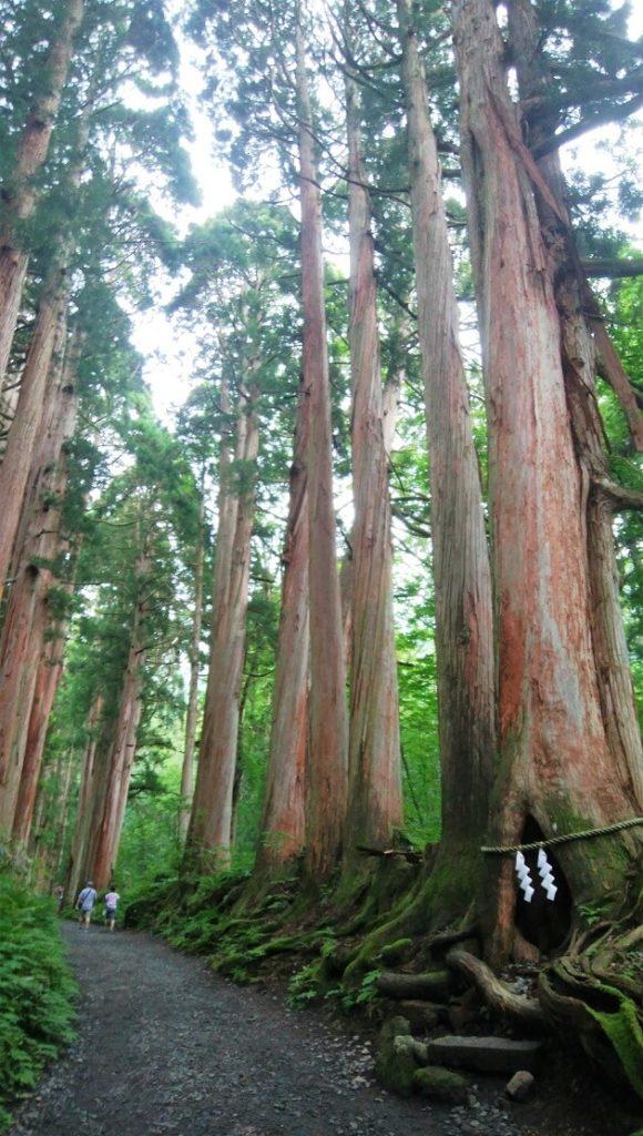 山に囲まれた長野の魅力を象徴する戸隠神社の参道