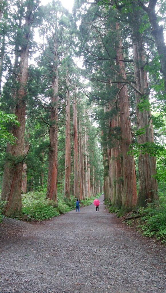 奥社へと続く美しい杉の参道