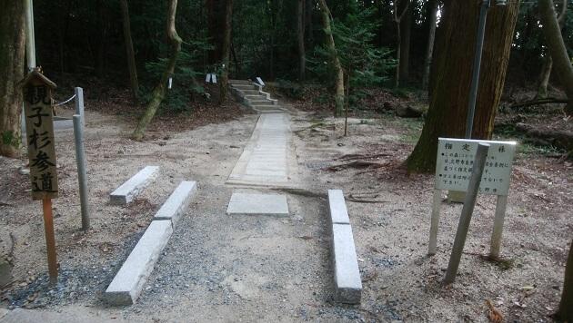 2019年にリニューアルされた親子杉参道