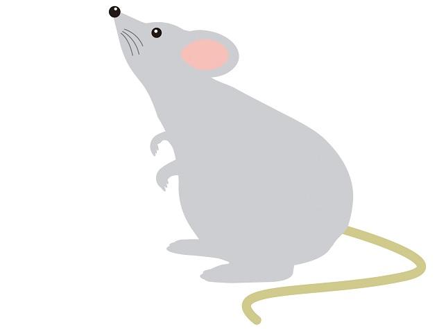 子年の象徴である鼠のイラスト