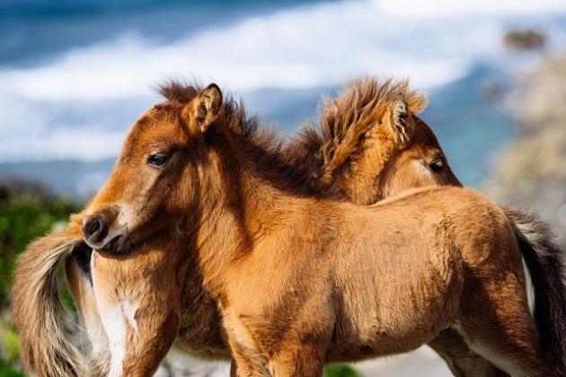 午年を象徴する馬のカット写真