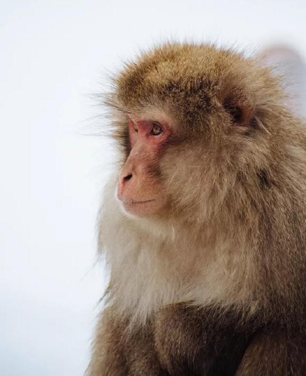 申年を象徴する猿のカット写真